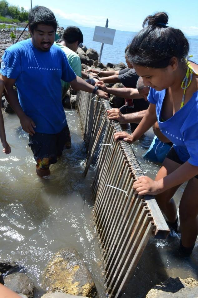 Interns of Ka Honua Momona fix a fish gate of an ancient Hawaiian fishpond